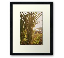 Rural Summer Framed Print