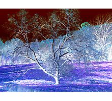 Queen of the Violet Valley Photographic Print