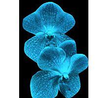 Blue Neon Orchids Photographic Print