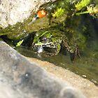 Frog Pond by Overlander4WD