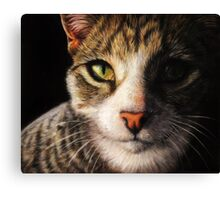 Fidget - Realistic Cat Portrait Fine Art Canvas Print