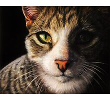Fidget - Realistic Cat Portrait Fine Art Photographic Print