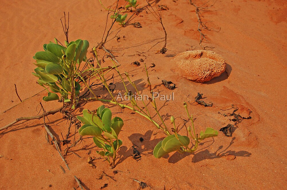 James Price Point, Broome,  Western Australia by Adrian Paul