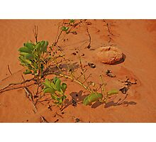 James Price Point, Broome,  Western Australia Photographic Print