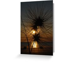 Tumbleweed, Cable Beach, Broome,  Western Australia Greeting Card