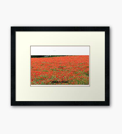 """ Flanders Fields"" Framed Print"