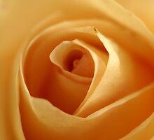 the depth of softness by Fran E.