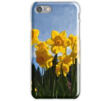 Yellow daffodil flowers in sunlight and blue sky. iPhone Case/Skin