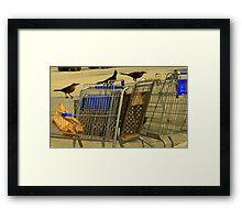 Buggy Birds Framed Print