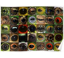 Frog eyes from around the world Poster