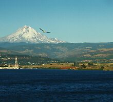 Mount  Hood  over Portland Oregon by Bellavista2
