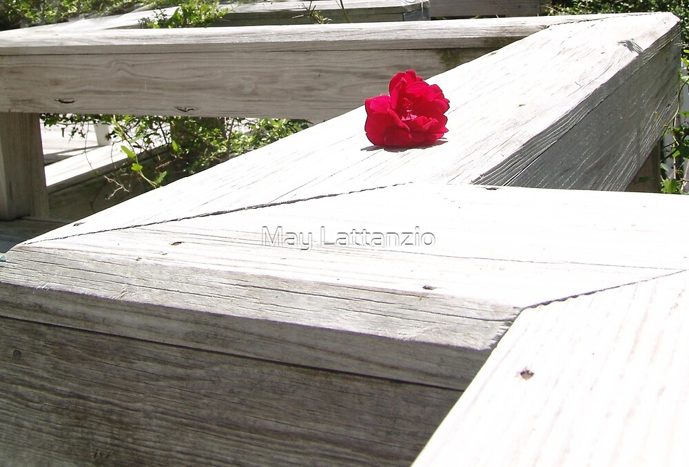 Red on White by May Lattanzio