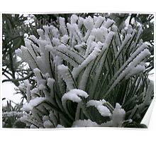 Frost-bitten Poster