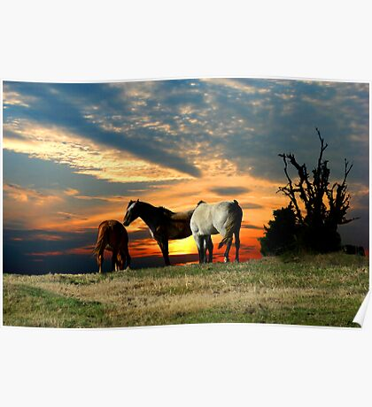 Mustang Sunset Poster