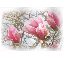 Pink Pastels Poster