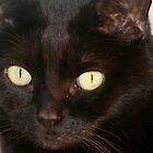 A Portrait of Midnight by Stephen Thomas