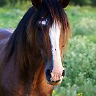 Tennessee Walker Stallion by Samantha Dean