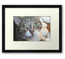 I'm An Angel (Ya Right!) Framed Print