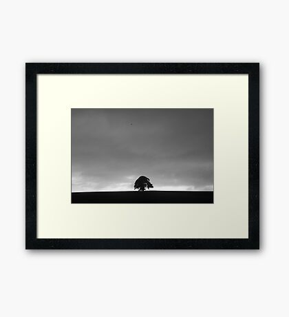 Solo Tree Framed Print