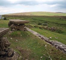Lions on Dartmoor by kalaryder
