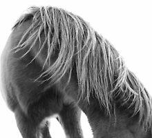 Horse Mane by Chris Jorgensen