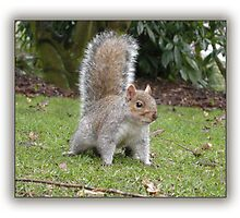 I'm Warning You - Keep Away From My Nuts! by Harri
