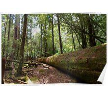 Mt Field National Park, Tasmania Poster
