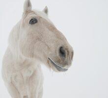 Ghost horse by Chris Jorgensen