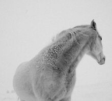 Snow Horse by Chris Jorgensen