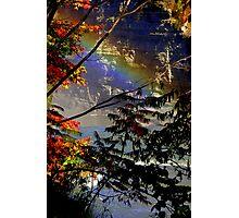 Rainbow Trees Photographic Print