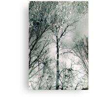 bare trees # 2 Canvas Print