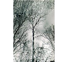 bare trees # 2 Photographic Print