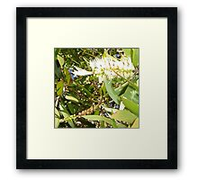 From Flower to Fruit and Further Framed Print