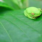 Green Frog by JordanRyan