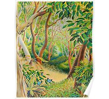Forest in Far North Queensland Poster