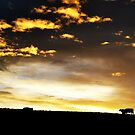 Cows on the horizon by oddoutlet