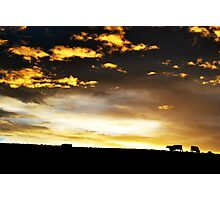 Cows on the horizon Photographic Print