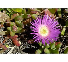 Pigface Photographic Print