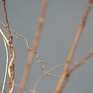 The Twists and Curves of Nature  by Cheyenne