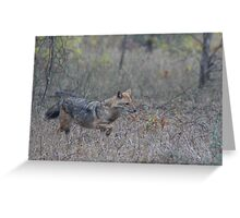 The Jackal Greeting Card
