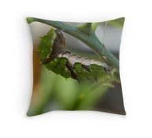Getting ready for metamorphosis Throw Pillow