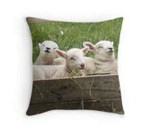 Sleeping Sheep Throw Pillow
