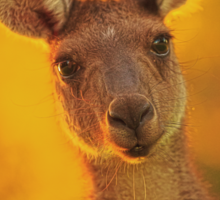 Kangaroo - Western Australia Sticker