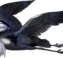 Grey Heron by MishelM