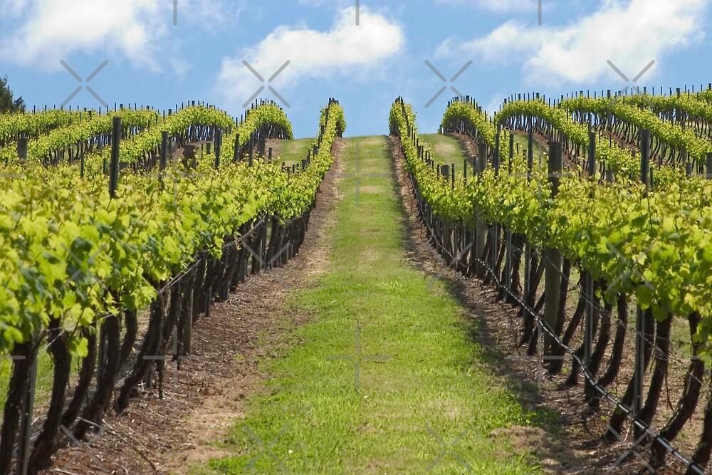 Salitage Winery by Adrianne Yzerman