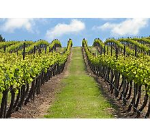 Salitage Winery Photographic Print