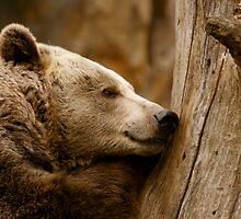 Sleeping Brown Bear by Louise Fahy
