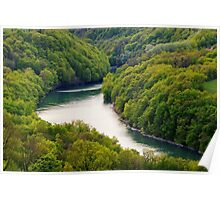 The Rhône river through the forest Poster