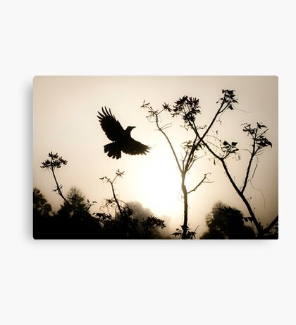 Crow in morning light Canvas Print