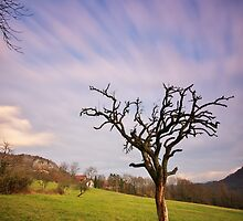 The dead tree and the clouds by Patrick Morand